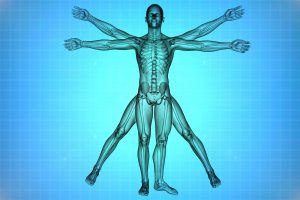 human anatomy physiology course review